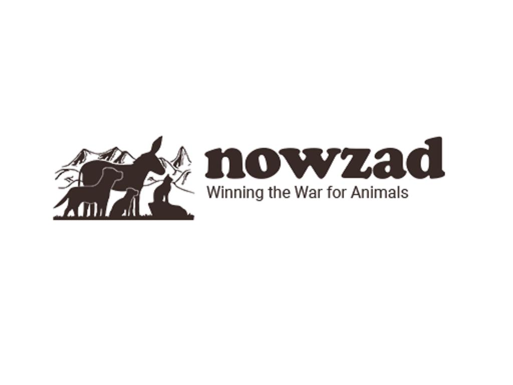 Nowzad